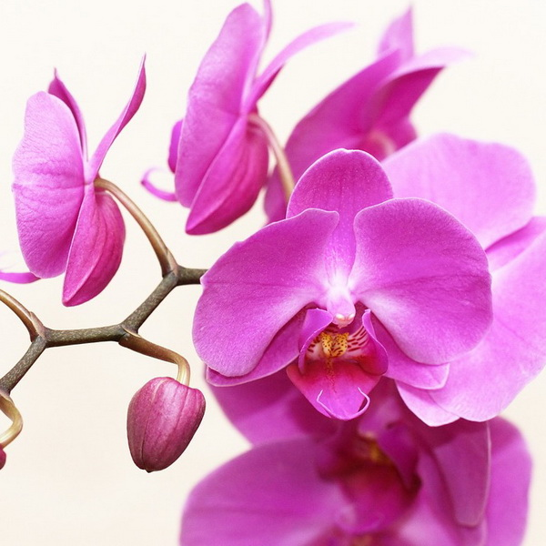 orchid 2265587_1280