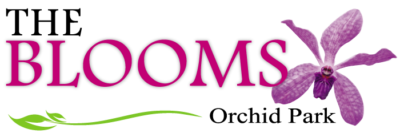 logo the blooms 700